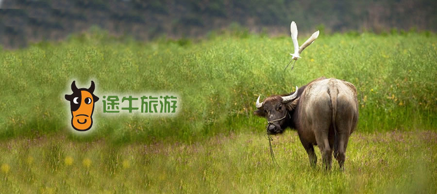 CHINE TUNIU