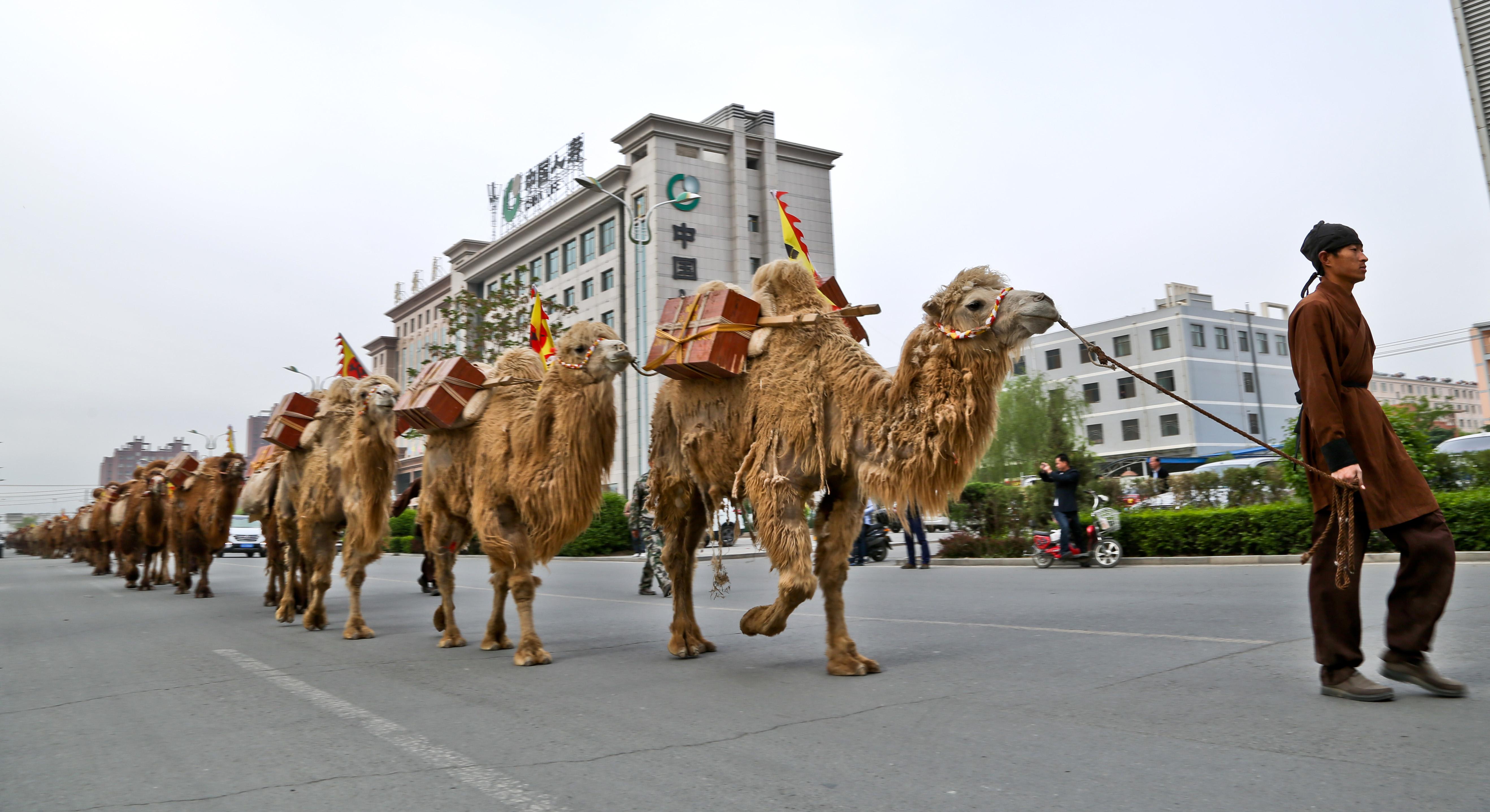 Comme au temps de la route de la soie historique, un marchand de thé et ses chameaux traversent la ville de Zhangye, dans la province chinoise du Gansu