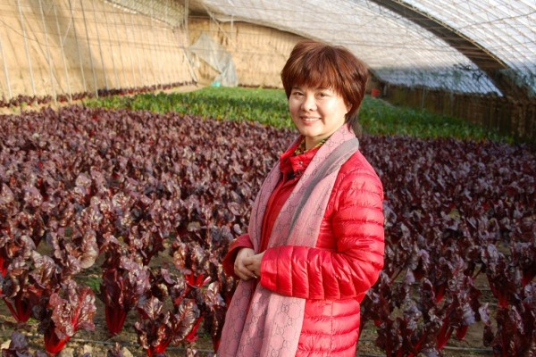 L'agricultrice Min Dong dans sa ferme biologique Tootoo à Pékin, le 30 décembre 2013. (Crédit : Stephan Scheuer / DPA / dpa Picture-Alliance/AFP)