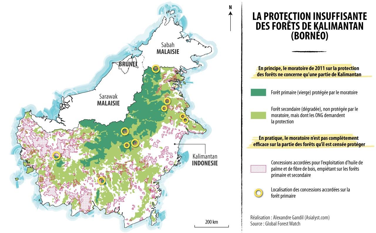 Carte : les forêts de Kalimantan (Bornéo) et concessions d'exploitation (huile de palme, fibre de bois) accordées par le gouvernement. Malgré le moratoire de 2011, certaines concessions empiètent sur la forêt vierge (dite forêt primaire). Réalisation : Alexandre Gandil.