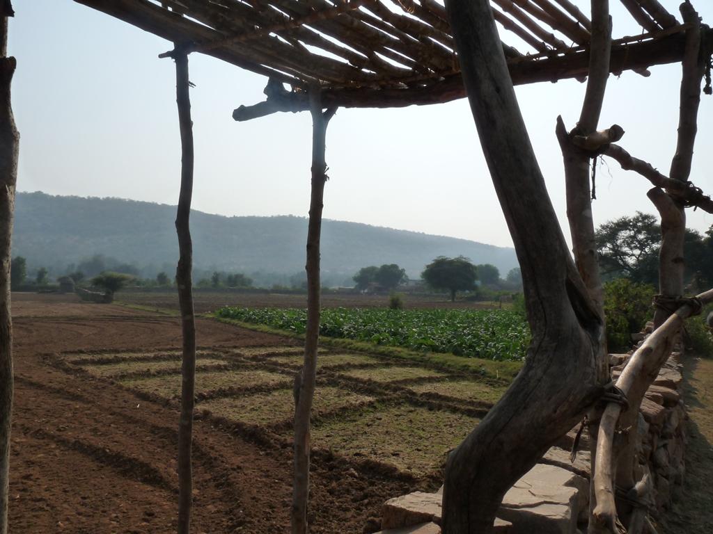 Dans le district d'Alwar au Rajasthan, le recueil des pluies a régénéré les terres agricoles, qui fournissent trois récoltes par an.