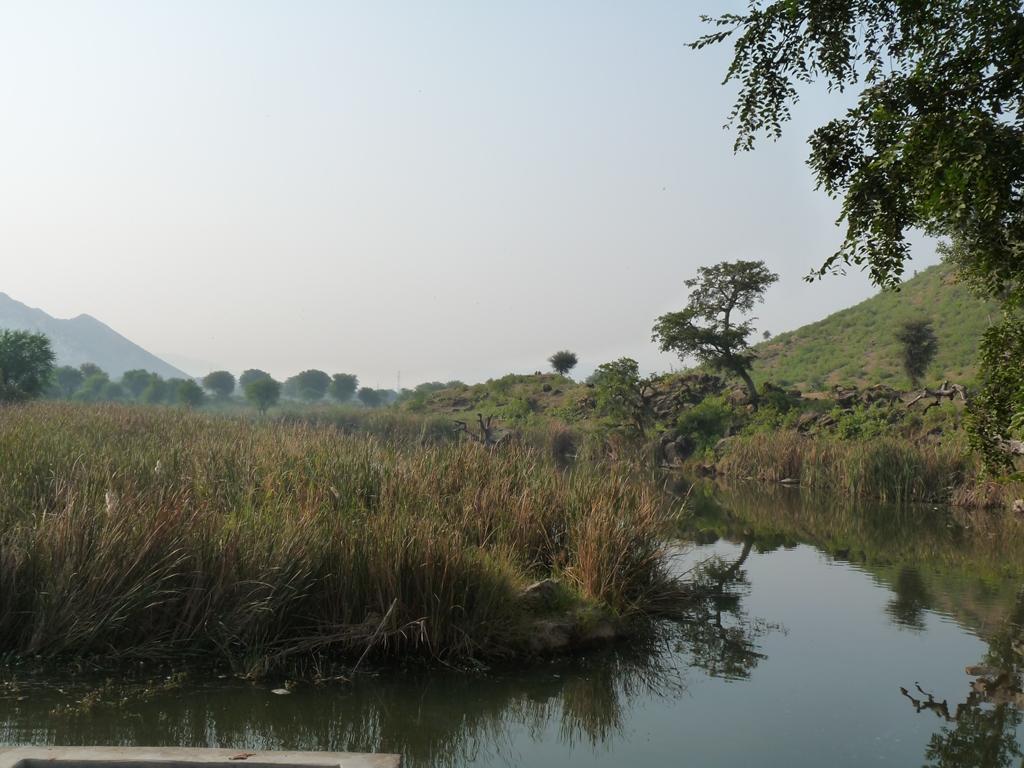 District d'Alwar, dans le Rajasthan au nord de l'Inde. Grâce au recueil des pluies, des rivières qui avaient disparu se sont remises à couler.
