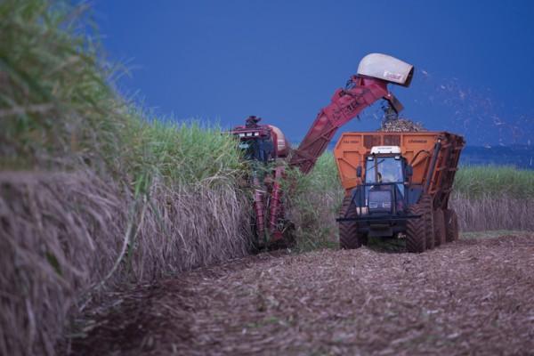 Récolte de canne à sucre par Cargill.