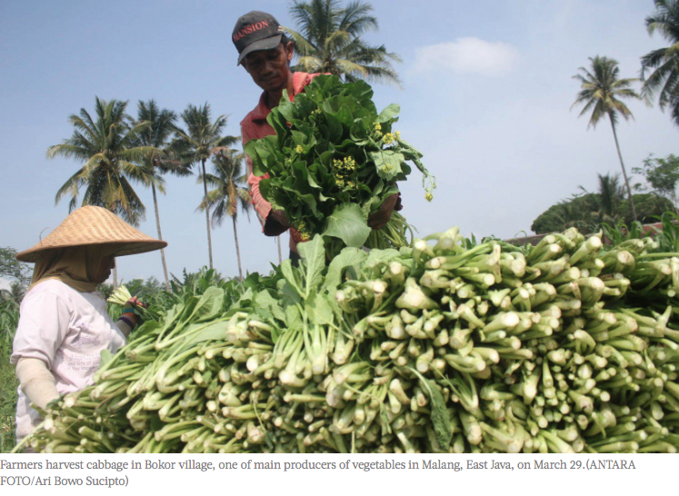 """Indonésie : Jokowi développe le e-commerce agricole. Copie d'écran du """"Jakarta Post"""", le 11 avril 2016."""