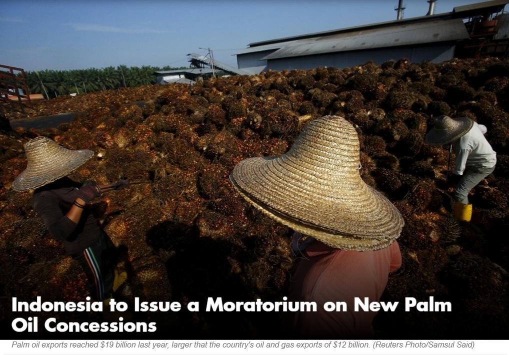 """Le président indonésien Jokowi prévoit d'imposer un moratoire sur l'accord de nouvelles concessions d'huile de palme. Copie d'écran du """"Jakarta Globe"""", le 15 avril 2016."""