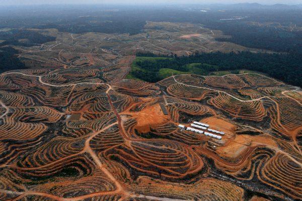 Les ravages de la déforestation, ici à Kalimantan en 2014, dans la concession de Karya Makmur Amadi déboisée pour l'aménagement d'une plantation de palmiers à huile.