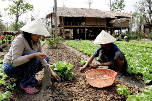 Photo de fermiers