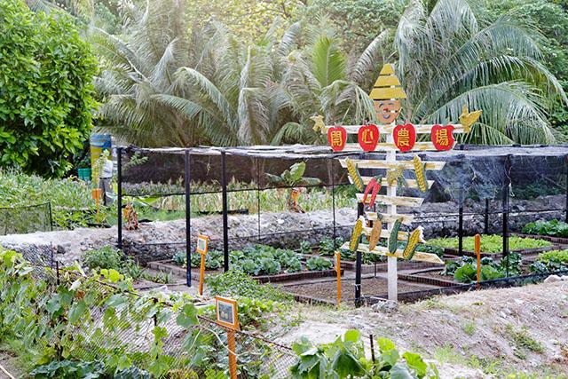 Jardin potager dans l'île de Taïping, dans l'archipel des Spratleys en mer de Chine du Sud.