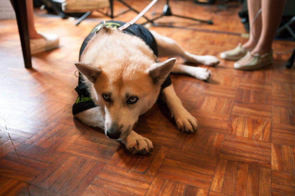 Les recettes des concerts organisés dans le café vont à des associations de protection animale.