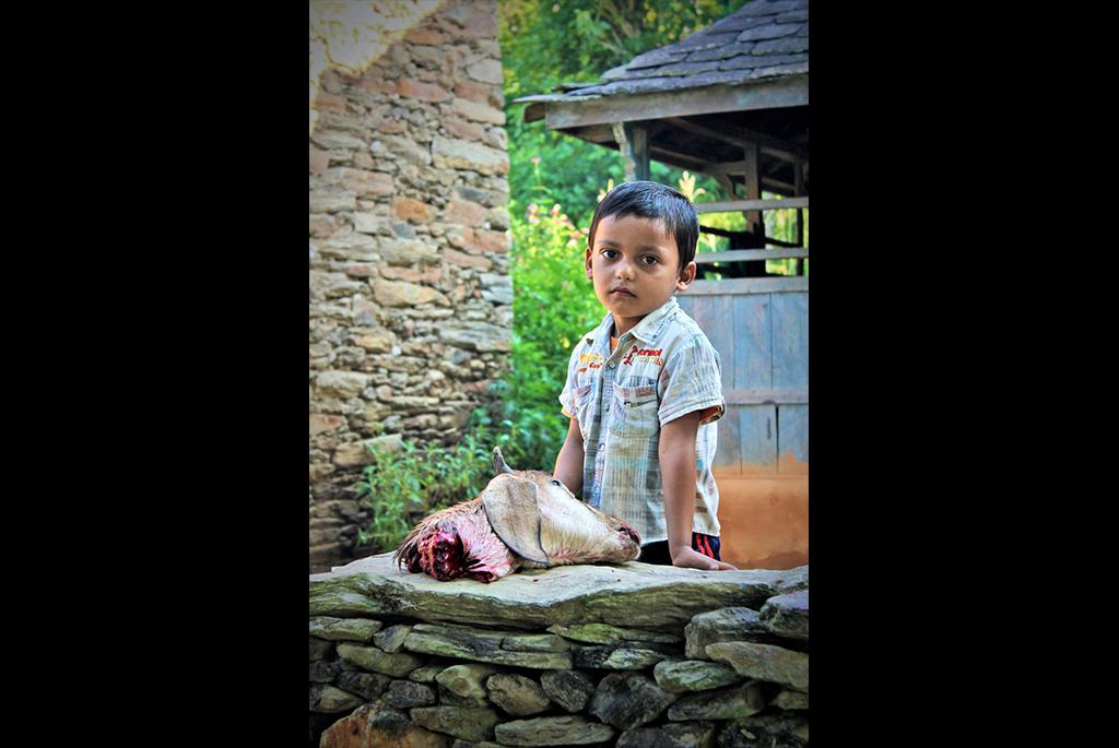 Huitième jour du Dashain. Dans la maison voisine, on sacrifie une chèvre. (Copyright : Juliette Buchez)