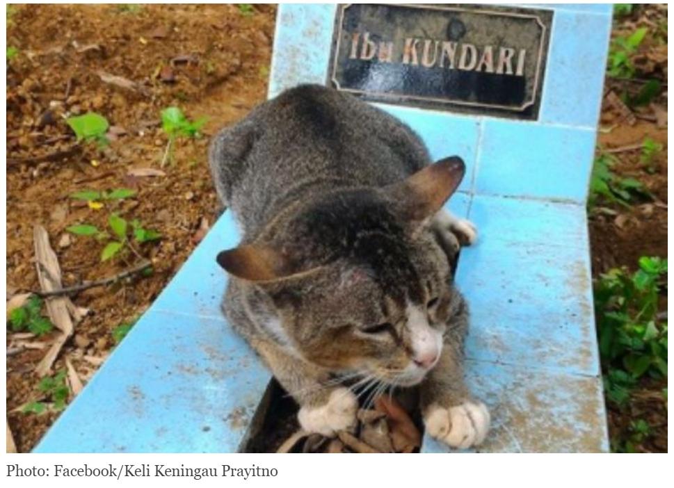 Vous n'oserez plus jamais dire que les chats n'ont pas de coeur ! Copie d'écran de Coconuts Jakarta, le 7 septembre 2016.