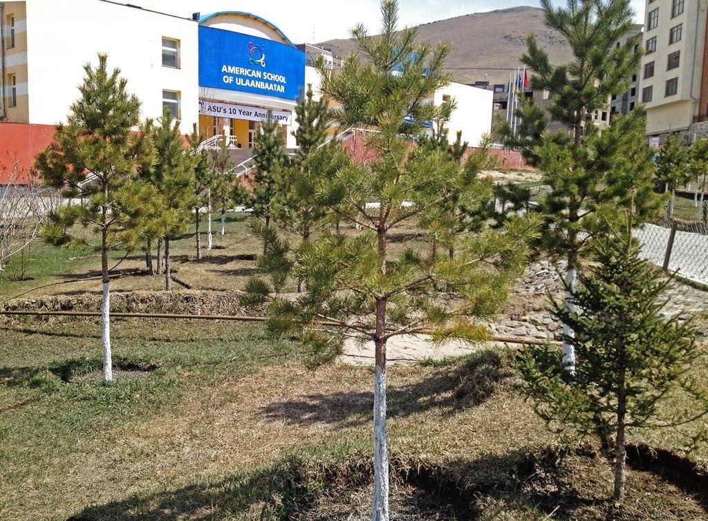 Chaulage et irrigation, l'école américaine d'Oulan-Bator (ASU) prend soin de ses arbres.