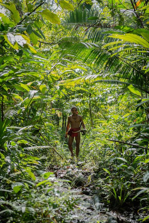 Un Sikerei, chamane d'une tribu indigène des îles Mentawai en Indonésie, à la recherche de plantes médicinales dans la forêt. (Copyright : Danishwara Nathaniel, 2017)