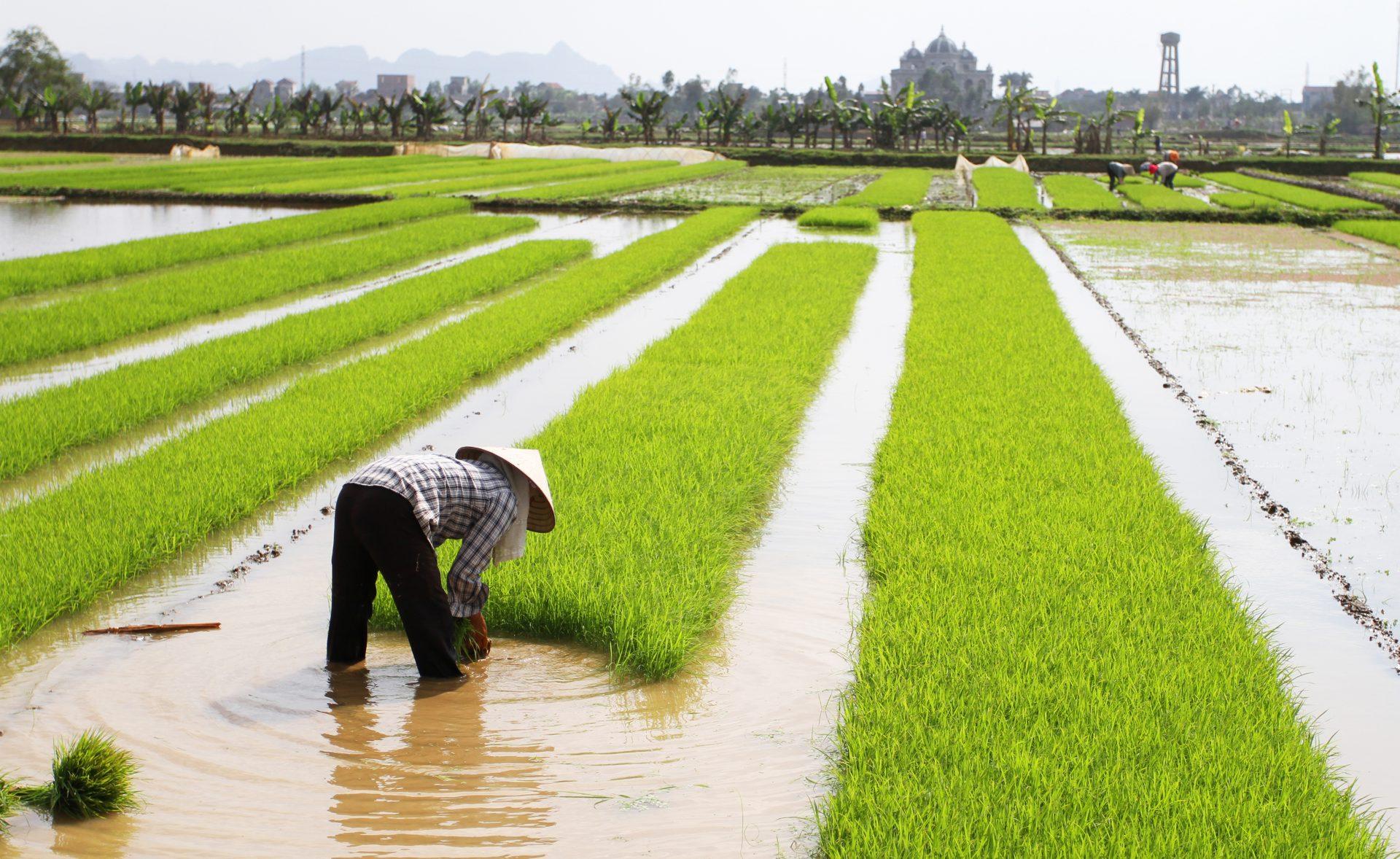 La Chine a lancé un plan quinquennal pour rendre à nouveau utilisables 90% des terres agricoles polluées d'ici 2030. (Source : Asialink Business)