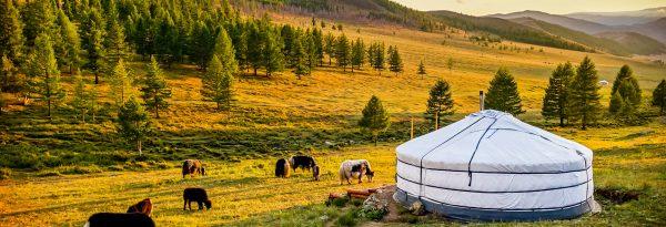 Dans la steppe mongole. (Source : Bourse des vols)