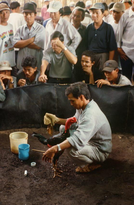 Combat de coqs au Vietnam - janvier 2000 - Bruno Birolli. (Copyright : Bruno Birolli)