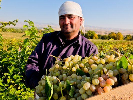 Vigneron près de Boukhara en Ouzbékistan. (Source : Trip Reporter)