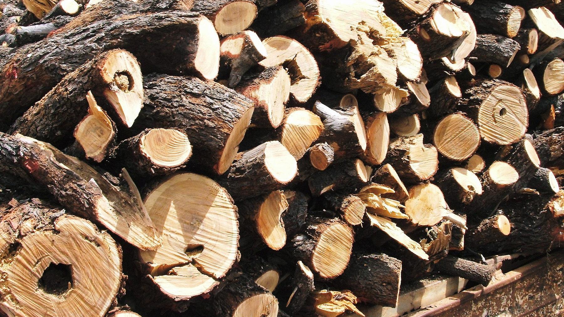 Bois de santal. (Source : Lush)
