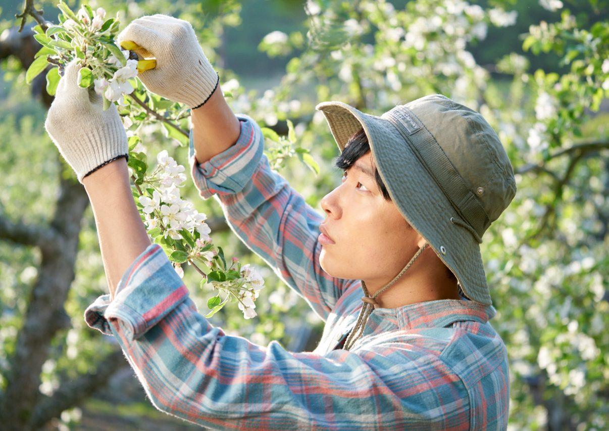 """Scène du film sud-coréen """"Petie Forêt"""". (Crédits : Borealiafilms)"""