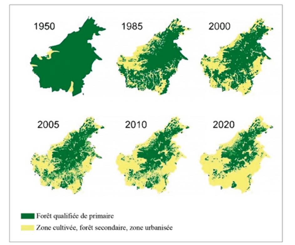 """Déforestation à Bornéo selon les estimations et prévisions du Fonds mondial pour la nature (WWF) (Source : Clotilde Luquiau, """"Une controverse autour de l'huile de palme: regard international versus regard local"""", in Cahiers d'Outre-Mer 71, no. 278, 1 July 2018: 541–53)"""